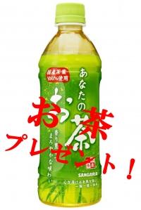 春のキャンペーン お茶プレゼント!